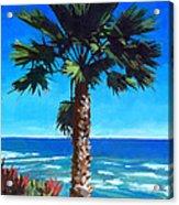 Fan Palm - Diamond Head Acrylic Print by Douglas Simonson