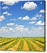 Farm Field At Harvest In Saskatchewan Acrylic Print by Elena Elisseeva
