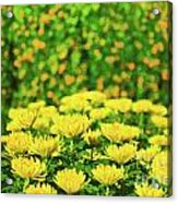 Flower Market Acrylic Print by MotHaiBaPhoto Prints