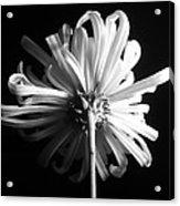 Flower Acrylic Print by Sumit Mehndiratta