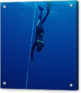 Free-diving Competitor Acrylic Print by Alexis Rosenfeld