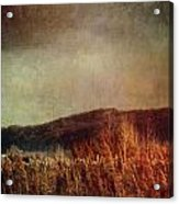 Frosty Field In Late Winter Afternoon Acrylic Print by Sandra Cunningham