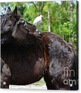 Get Off My Back Acrylic Print by Lynda Dawson-Youngclaus