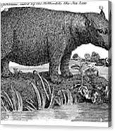 Hippopotamus Acrylic Print by Granger
