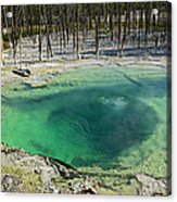 Hot Springs Yellowstone National Park Acrylic Print by Garry Gay
