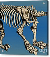 Megatherium Extinct Ground Sloth Acrylic Print by Science Source