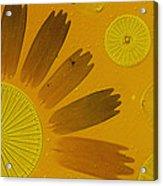 Microscopic Arrangement Acrylic Print by Darlyne A. Murawski