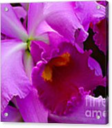 Orchid 5 Acrylic Print by Julie Palencia