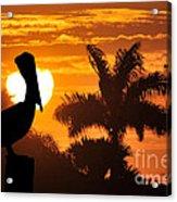 Pelican At Sunset Acrylic Print by Dan Friend