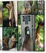 Please Don't Feed The Squirrels Acrylic Print by Elizabeth Hart