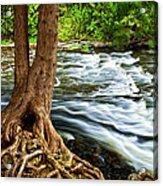 River Through Woods Acrylic Print by Elena Elisseeva
