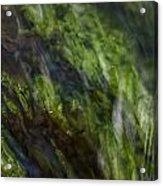 Sea Weed Acrylic Print by Michael Mogensen
