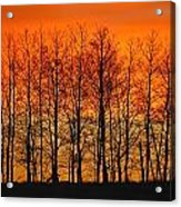 Silhouette Of Trees Against Sunset Acrylic Print by Don Hammond