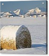 Snow-covered Hay Bales Okotoks Acrylic Print by Michael Interisano