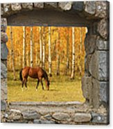 Stone Window View And Beautiful Horse Acrylic Print by James BO  Insogna