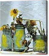 Sunflowers .helianthus Annuus Acrylic Print by Bernard Jaubert