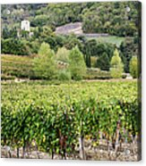 Vineyard Acrylic Print by Jeremy Woodhouse
