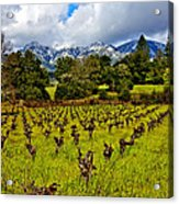 Vineyards And Mt St. Helena Acrylic Print by Garry Gay