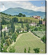 Vineyards On A Hillside Acrylic Print by Rob Tilley