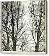 Winter Trees Acrylic Print by Silvia Ganora