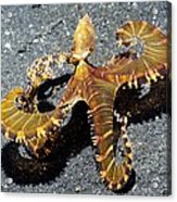 Wonderpus Octopus Acrylic Print by Georgette Douwma