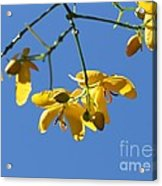 Yellow And Blue Acrylic Print by Theresa Willingham