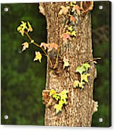 1209-0859 September Tease Acrylic Print by Randy Forrester