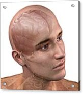 Head Anatomy, Artwork Acrylic Print by Sciepro
