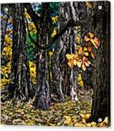 Autumn Landscape Acrylic Print by Vladimir Kholostykh