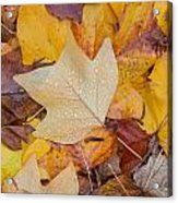 Autumn Leaves Acrylic Print by Hans Engbers