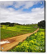 Countryside Landscape Acrylic Print by Carlos Caetano