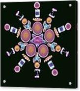 Diatom Assortment, Sems Acrylic Print by Steve Gschmeissner