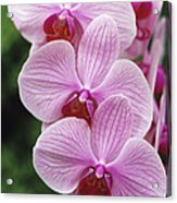 Orchid Flowers Acrylic Print by Duncan Smith