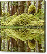 Swamp Acrylic Print by David Nunuk