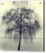 Winter Tree Acrylic Print by Joana Kruse