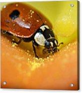 Beetle Acrylic Print by Igor Sinitsyn