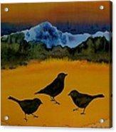 3 Blackbirds Acrylic Print by Carolyn Doe