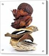 Dried Pieces Of Vegetables.  Acrylic Print by Bernard Jaubert