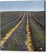 Field Of Lavender. Provence Acrylic Print by Bernard Jaubert