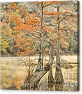 Cypress Trees In The Mist Acrylic Print by Iris Greenwell