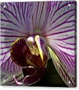 Orchid Flower Acrylic Print by C Ribet