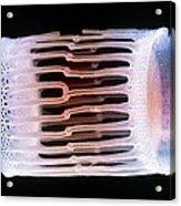 Diatom Alga, Sem Acrylic Print by Steve Gschmeissner
