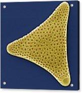 Diatom, Sem Acrylic Print by Steve Gschmeissner