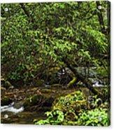 Rushing Mountain Stream Acrylic Print by Thomas R Fletcher
