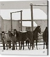 71 Ranch Acrylic Print by Diane Bohna