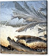 Frost On A Windowpane Acrylic Print by Thomas R Fletcher