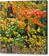 A Blustery Autumn Day Acrylic Print by Frozen in Time Fine Art Photography