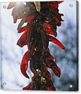 A Bunch Of Red Peppers Hung To Dry Acrylic Print by Stephen St. John