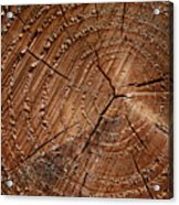 A Close Up Of Tree Rings Acrylic Print by Sabine Davis