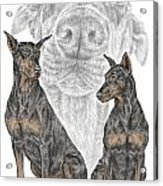 A Doberman Knows - Dobe Pinscher Dog Art Print Acrylic Print by Kelli Swan